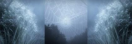 fogweb-small-desat