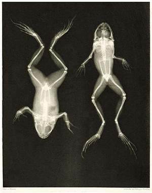 frog-xrays-1896
