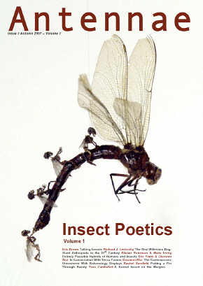 insectpo2007.jpg